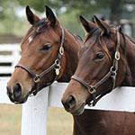 Opsporen van Cushing (PPID) bij paarden