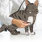 Dokter Kat