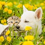 Hond en kat tussen de paardenbloemen