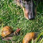 Nieuwsbrief - Honden die slakken eten